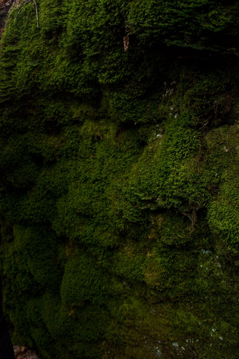when we lay our backs against this wall and stayed perfectly still, we could hear this moss - it has a sound - peaceful, and deep and damp