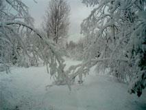 Lyndas_Backyard_April24_2012