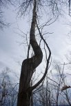 Bruce Peninsula tree in early spring