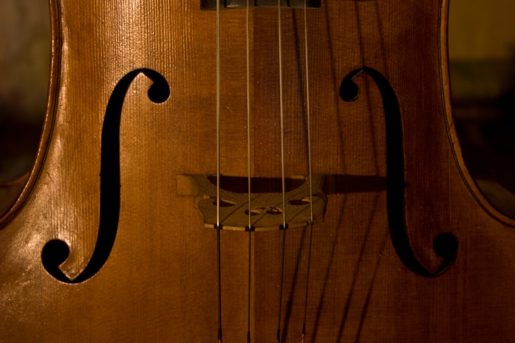 cellobelly