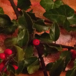 The holly and the ivy - a gift from family this year
