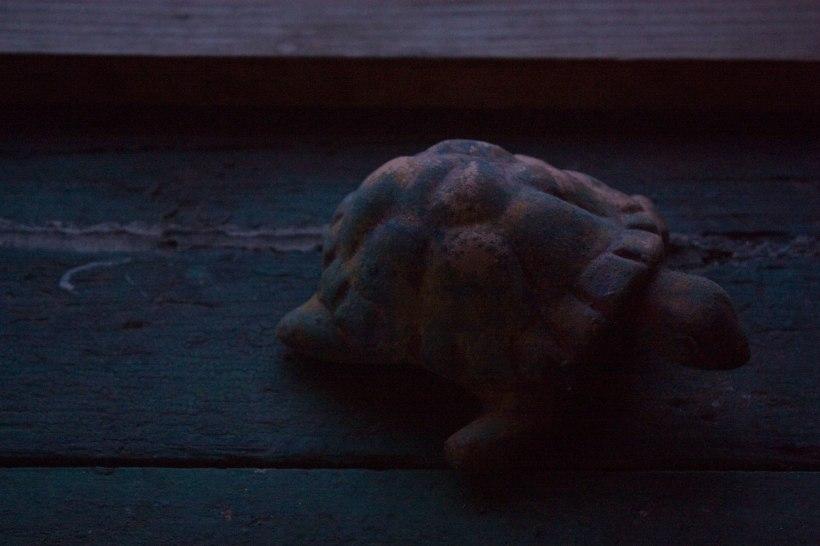 TurtleWindowsill