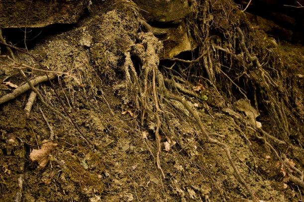 Mudbank_roots