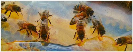 photo by Robbin McGregor, bee-keeper