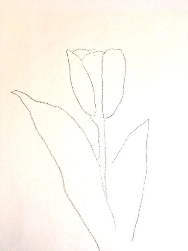 Tulip_Drawing